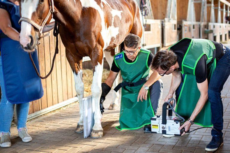Tierarzt Pferd / Pferdetierarzt - Kojah & Dylewski